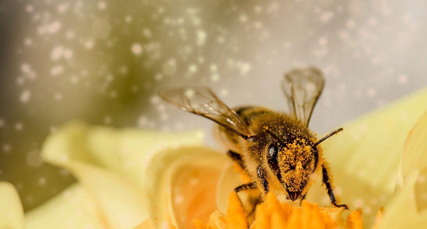 Bild einer Biene auf einer Blüte
